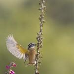 A Sparrow Alights
